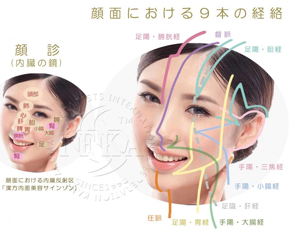 顔面における9本の経絡
